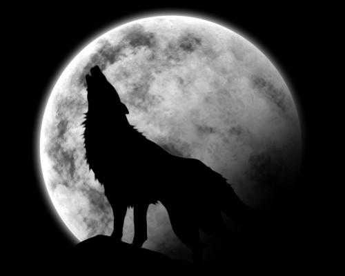 loup qui hurle à la lune2.jpg